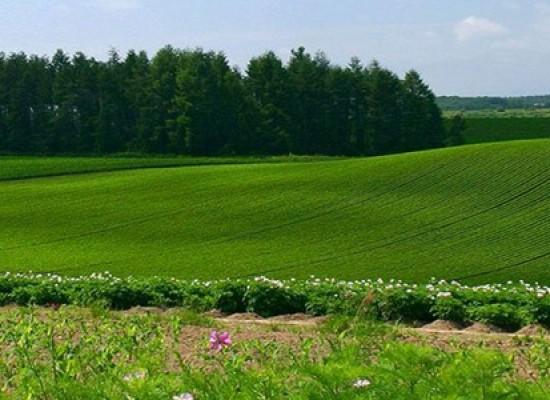 Срочное оформление земли в Крыму, стоимость